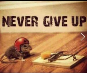 Mouse with helmet on going for cheese in a mouse trap.